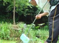 ビオトープの浮き草掃除_c0108460_1648845.jpg