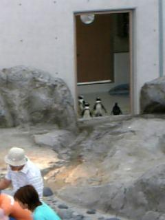 大網ペンギン…!?_d0046460_18193245.jpg
