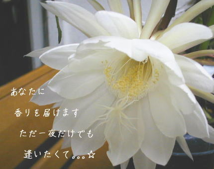 c0095663_7503527.jpg