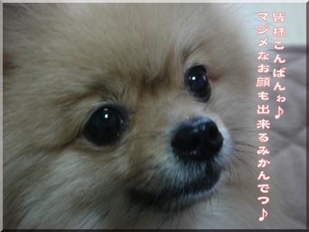 b0078073_16141333.jpg