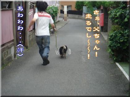 b0078073_162908.jpg
