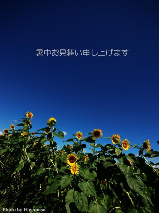 f0001496_1664099.jpg