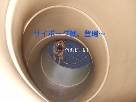 b0087400_23373552.jpg