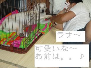 可愛いラナ姫♪_f0086814_6452226.jpg