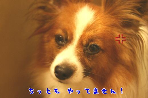 d0013149_1013246.jpg
