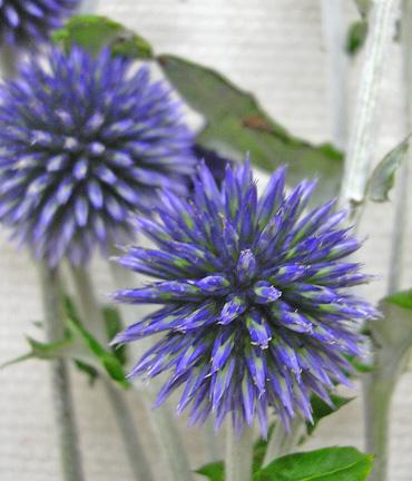 7月31日 紫の・・・_a0001354_22221913.jpg
