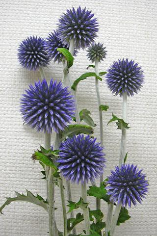 7月31日 紫の・・・_a0001354_2222440.jpg