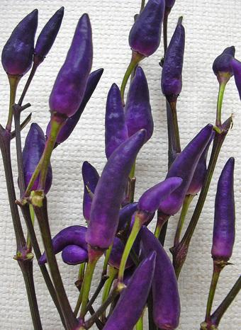 7月31日 紫の・・・_a0001354_2223241.jpg