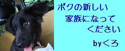 f0087256_23135927.jpg