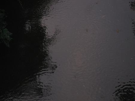 f0106692_1955872.jpg