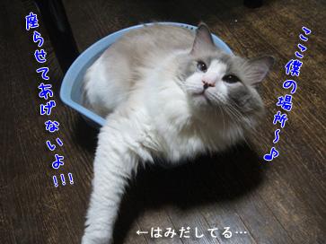 独り占め〜♪