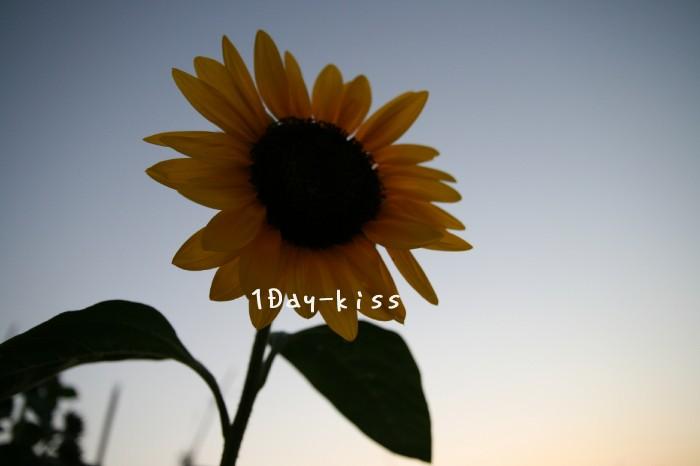 b0111005_81725100.jpg