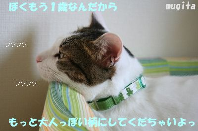 f0063729_17293633.jpg
