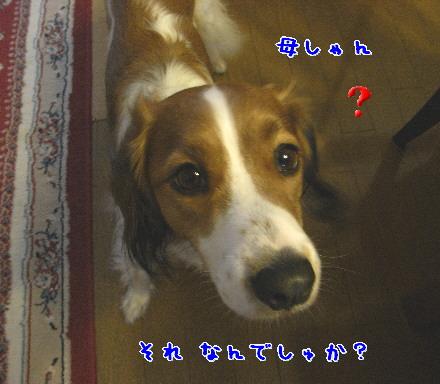 d0013149_137367.jpg