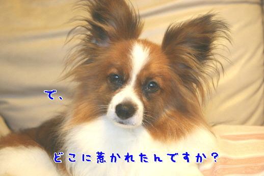 d0013149_29115.jpg