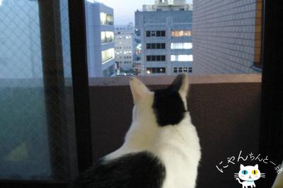 夕涼み_e0031853_1253652.jpg