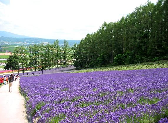 北海道旅行 4  2020-07-16 00:00_b0093754_0223640.jpg