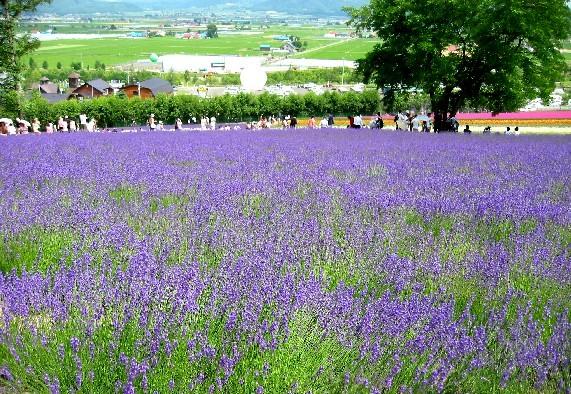 北海道旅行 4  2020-07-16 00:00_b0093754_0231155.jpg