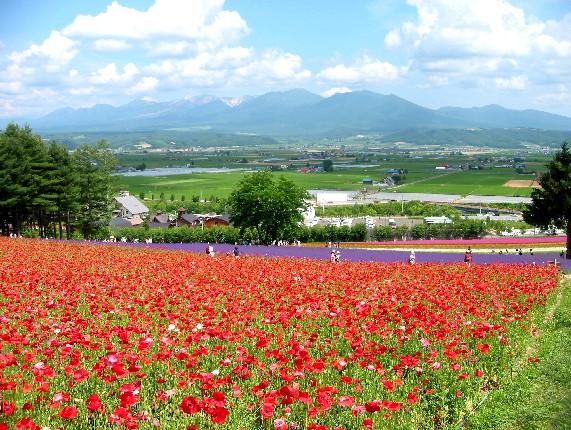 北海道旅行 4  2020-07-16 00:00_b0093754_23532923.jpg