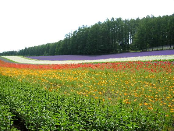 北海道旅行 4  2020-07-16 00:00_b0093754_23541044.jpg