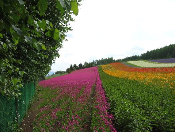 北海道旅行 4  2020-07-16 00:00_b0093754_23541870.jpg