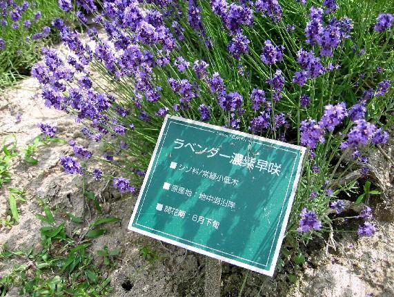 北海道旅行 4  2020-07-16 00:00_b0093754_23544229.jpg