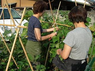 野菜の収穫_e0109554_2319463.jpg
