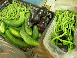 野菜の収穫_e0109554_23201947.jpg