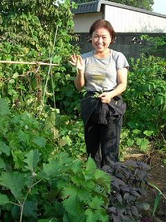 野菜の収穫_e0109554_2320851.jpg