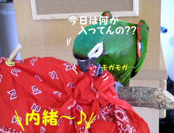 f0132055_112130.jpg