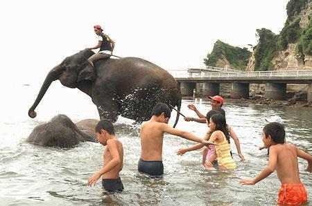 海水浴は楽しいゾウ_b0052564_1131018.jpg