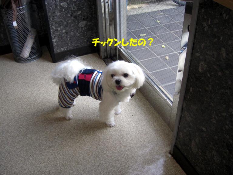 b0060071_2313162.jpg