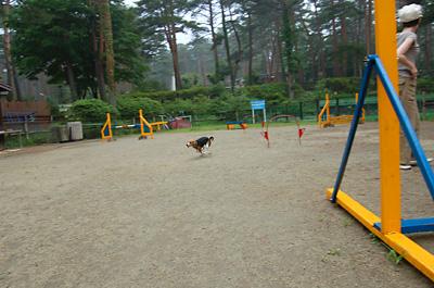 富士の裾野へ行く_b0035072_2010521.jpg