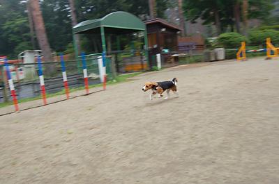 富士の裾野へ行く_b0035072_20122926.jpg