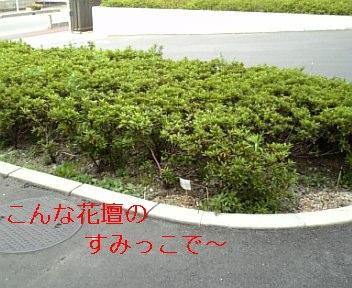 c0121141_010426.jpg