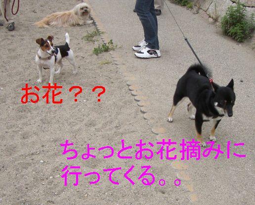 f0053952_17501912.jpg