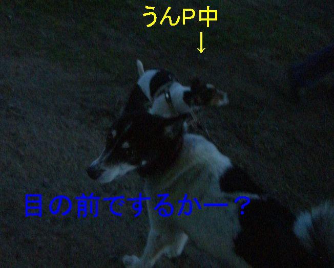 f0053952_17564071.jpg