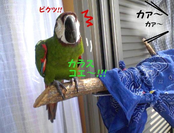 f0132055_0125027.jpg