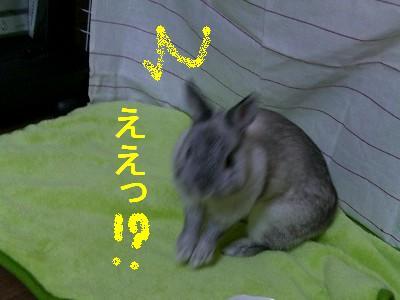 f0104057_20305553.jpg