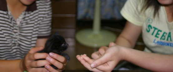 新しい家族_f0064359_20112547.jpg