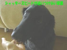 d0043478_04458.jpg