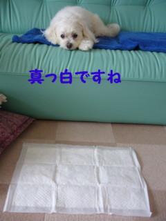 f0145192_1446509.jpg