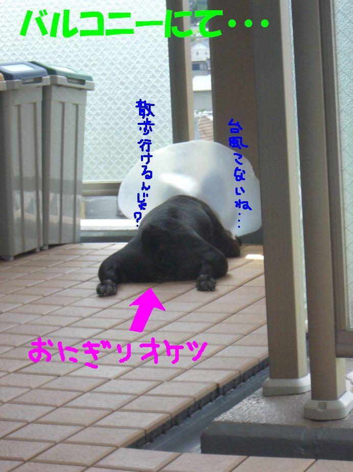 c0113109_1481892.jpg
