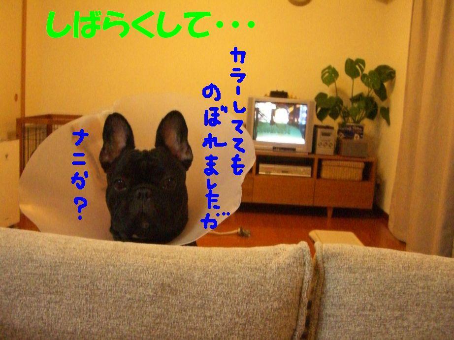 c0113109_148732.jpg