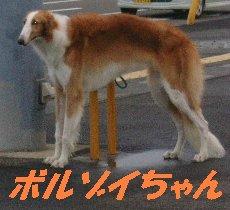 f0082855_20115057.jpg