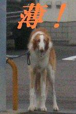 f0082855_20121523.jpg
