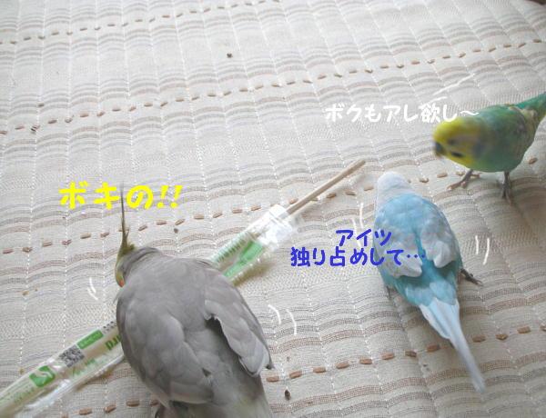 f0132055_9251544.jpg