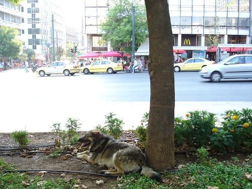 シンダグマの信号機犬_f0037264_6391740.jpg