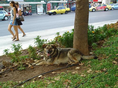 シンダグマの信号機犬_f0037264_6395671.jpg