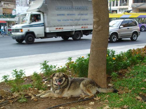 シンダグマの信号機犬_f0037264_6401992.jpg